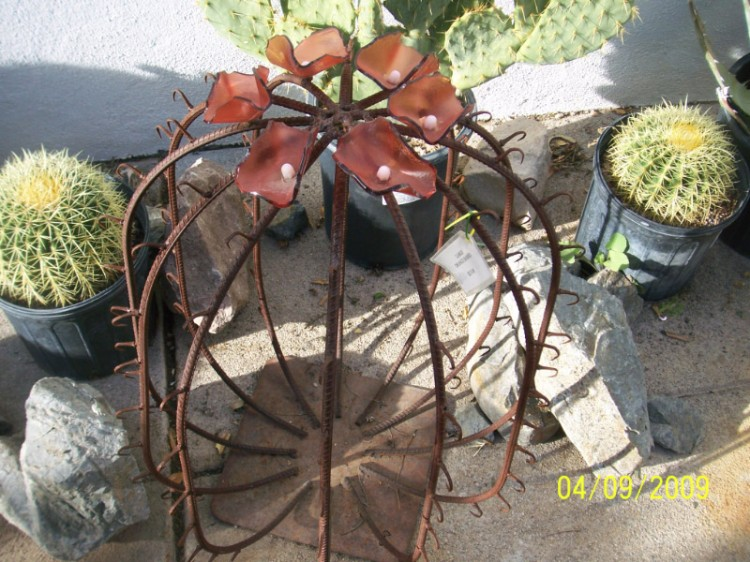 Barrel Cactus as Garden Art