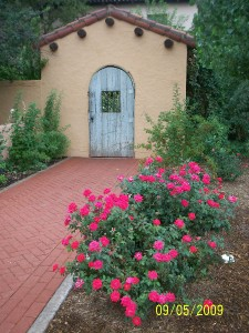 Using Color in Your Xeriscape