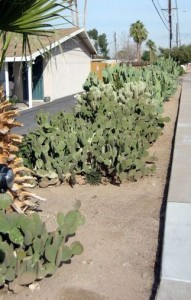 Cactus as Home Security