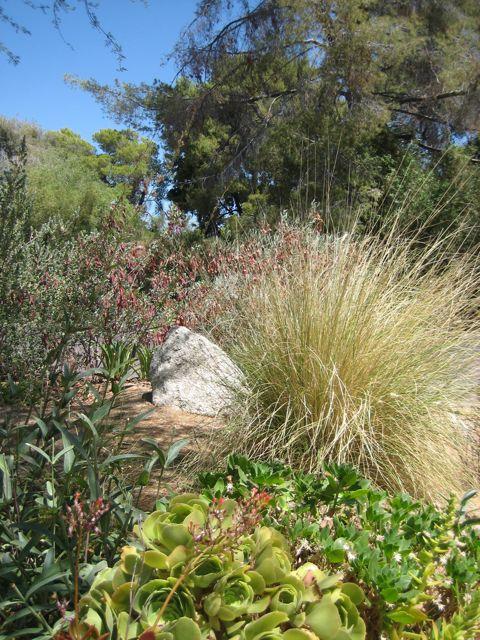 grasses are pretty when dormant