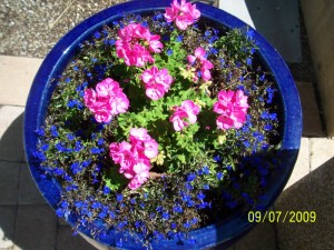 Keep Potted Plants Fertilized