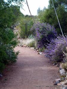 Boyce Thompson Arboretum