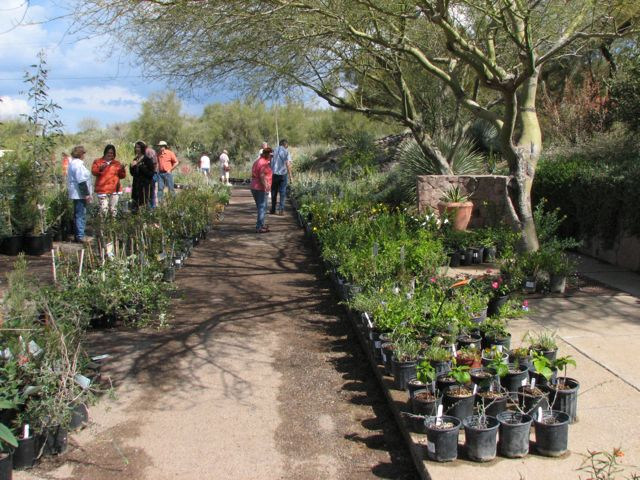 Boyce Thompson Arboretum Plant Sale