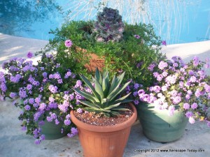 Mix it up with container plants